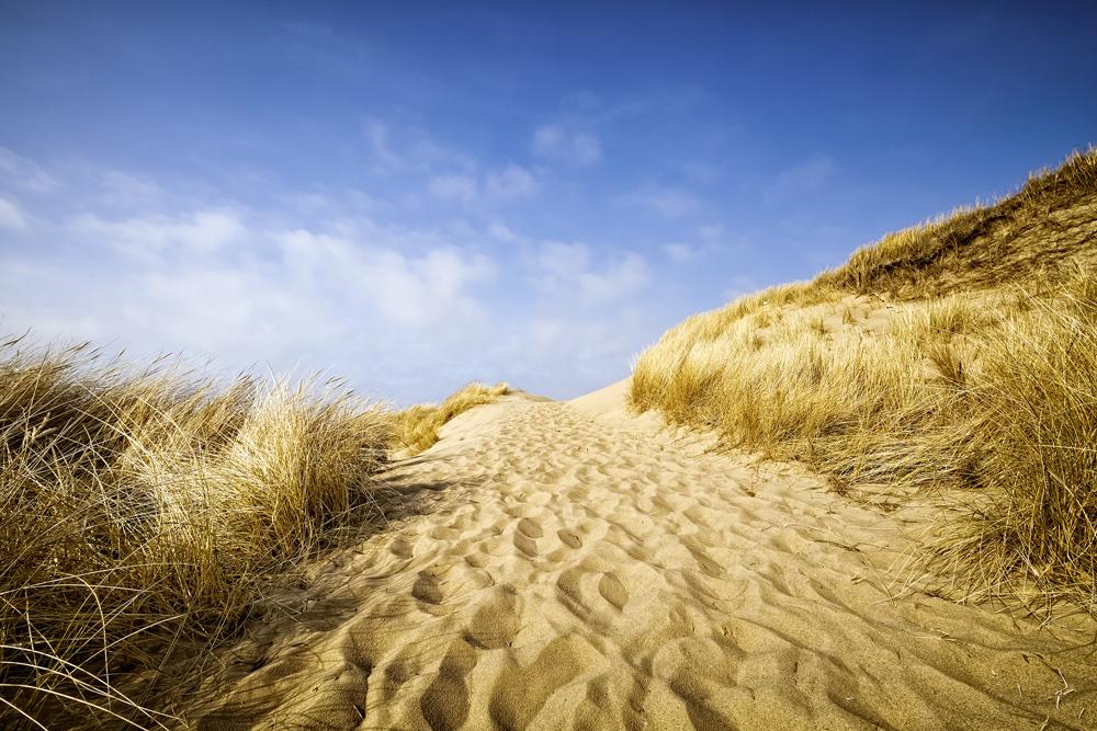 AP XXL2 - Sylt Beach - 150g Vlies (2 x 1.33 m)