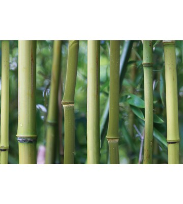 AP Digital - Bamboo - 150g Vlies