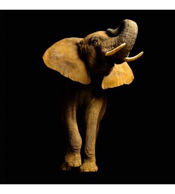 AP Digital - Elefant Font - SK Folie