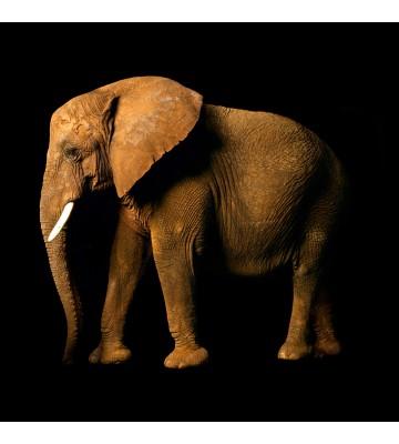 AP Digital - Elefant Side - SK Folie
