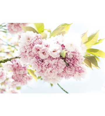 AP Digital - Springtime - 150g Vlies