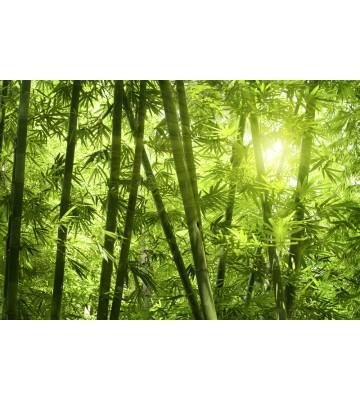 AP XXL2 - Bamboo Forest - 150g Vlies