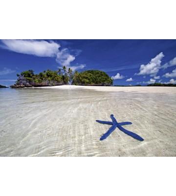 AP XXL2 - Blue Starfish - SK Folie