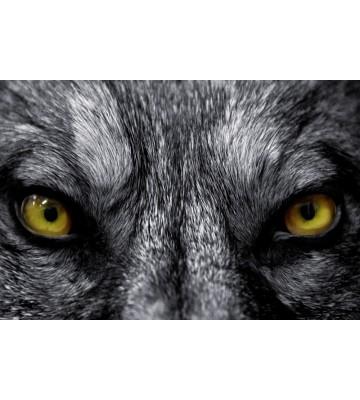 AP XXL2 - EyeTo Eye - SK Folie