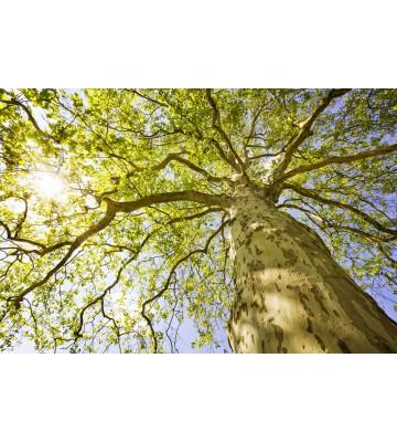 AP XXL2 - Green Canopy Trees - 150g Vlies
