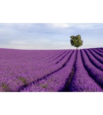 AP XXL2 - Lavender Field - 150g Vlies