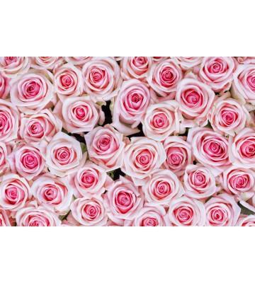 AP XXL2 - Pink Roses - 150g Vlies