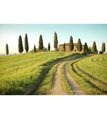 AP XXL2 - Toscana Summer - SK Folie