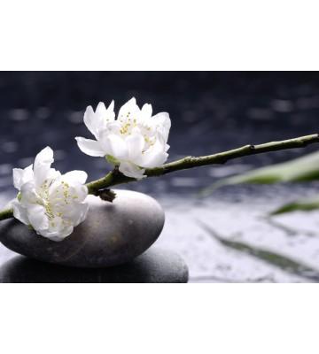AP XXL2 - White Flowers - 150g Vlies
