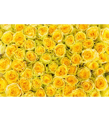 AP XXL2 - Yellow Roses - 150g Vlies