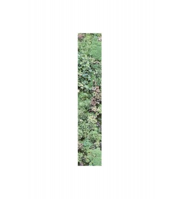 Accent - ACE67077007 - Intisse Panel: Vertical Garden