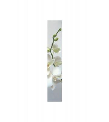 Accent - ACE67180002 - Duplex Panel: Orchidee