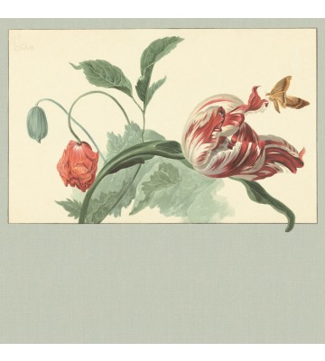 Eijffinger Fototapete Masterpiece 358119 - Tulip and Poppy (Grün)