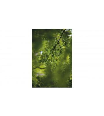 DM322-2 Green leaves 180*265