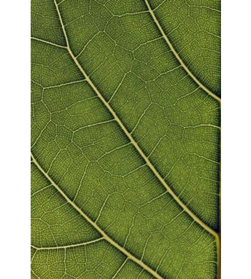 P0315014 Evergreen hw. 180*265