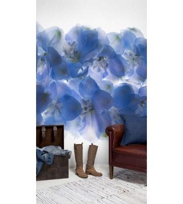 P1405024 Blossom 180x265