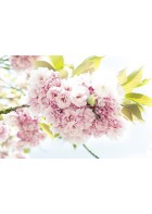 AP Digital - Springtime - 150g Vlies