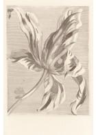 Eijffinger Fototapete Masterpiece 358117 - Tulip Teyler (Sand)