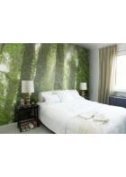 P1117018 Rainforest 360*265